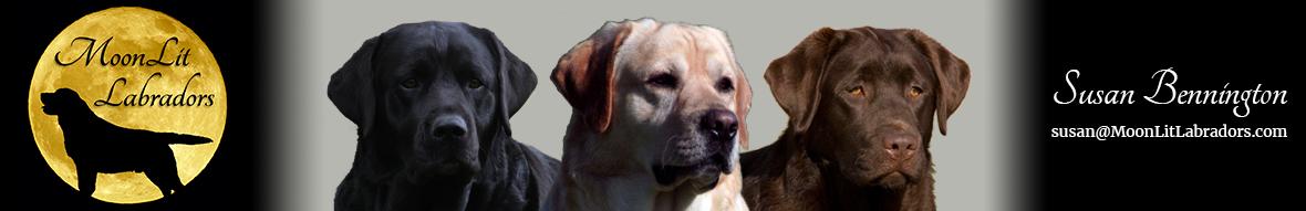 MoonLit Labradors | Black, Yellow, and Chocolate Labradors | 716.592.0663