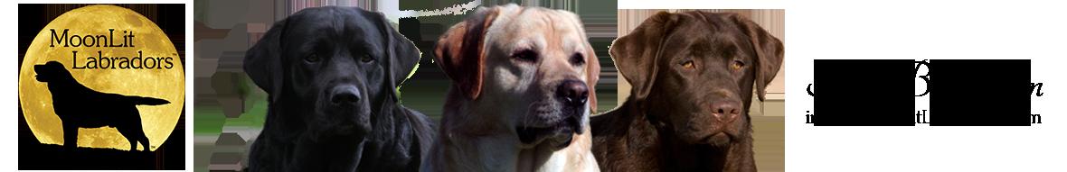 MoonLit Labradors | Black, Yellow, and Chocolate